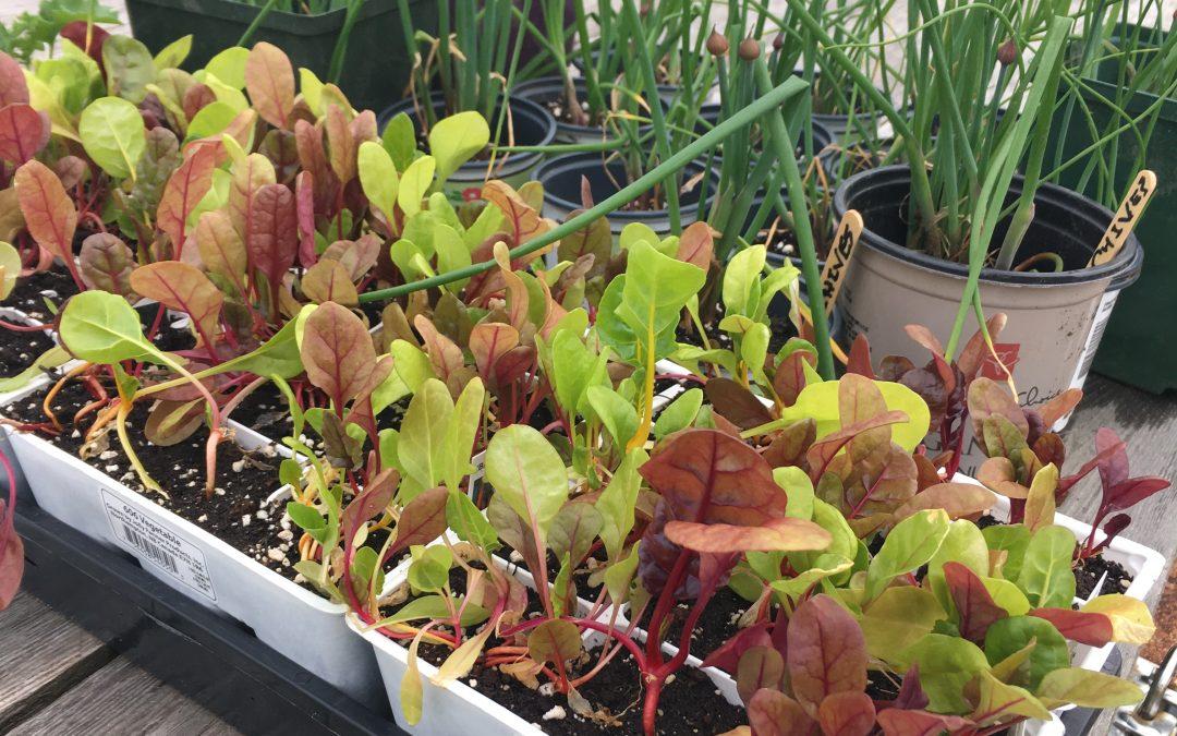 Seedlings for Sale!