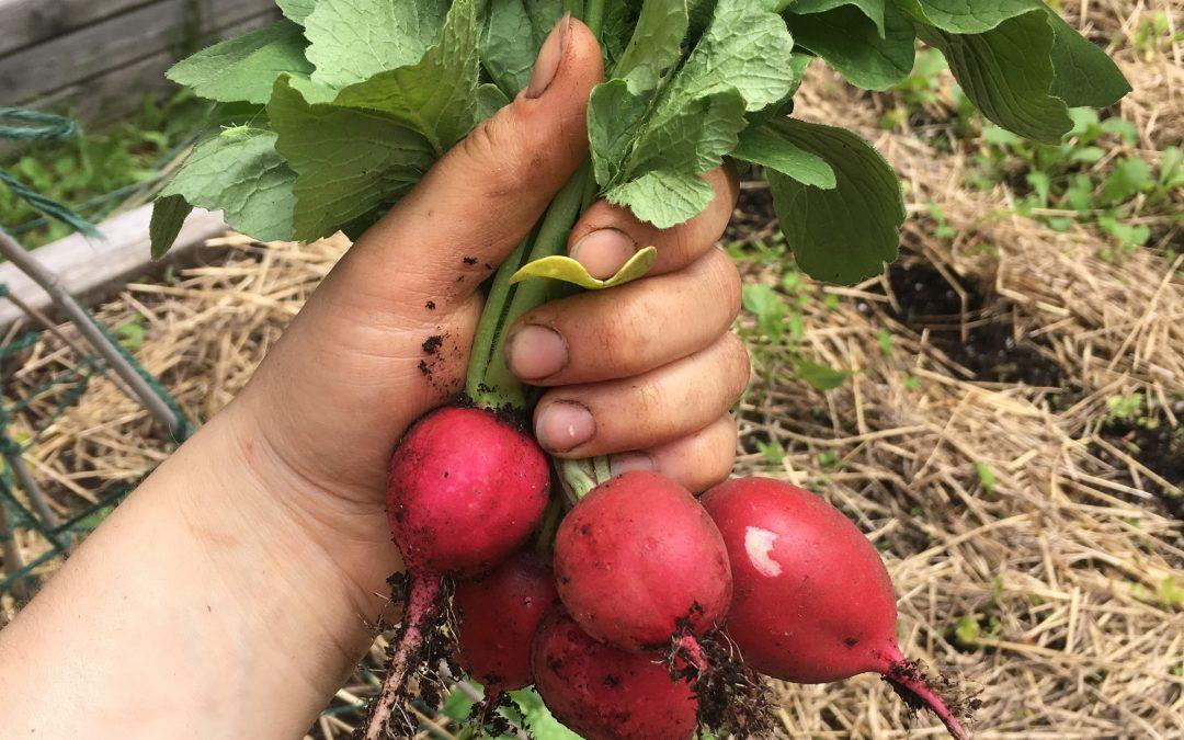 Garden Harvest Challenge 2017