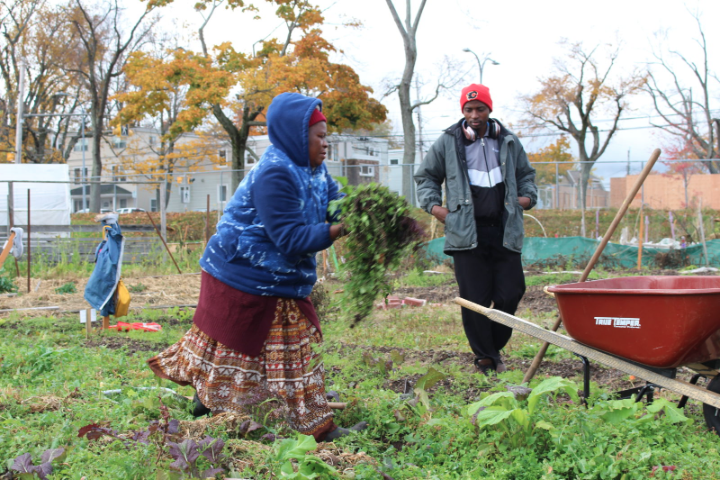 Putting down roots: How community gardens help immigrant retention