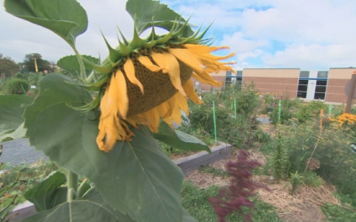 Common Roots Urban Farm finds potential new home