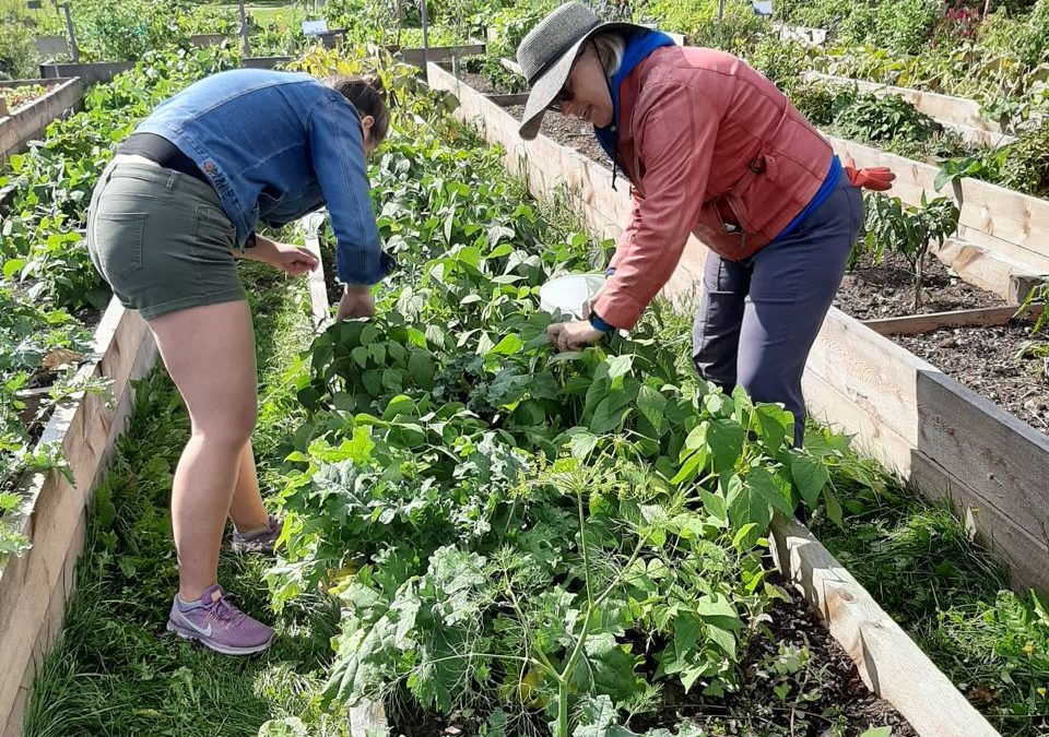 Volunteer with us at Common Roots BiHi Park!
